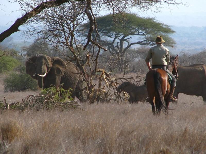Horseback-Safari-in-Manyara-Conservancy-Tanzania